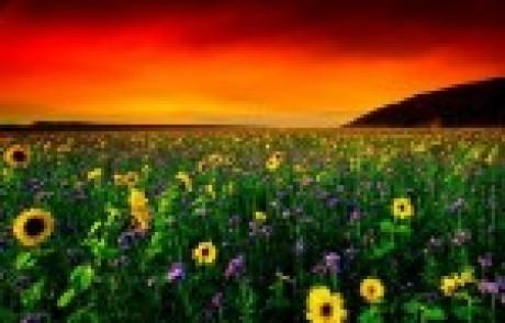מרכז אמיר – אבחון פסיכודידקטי